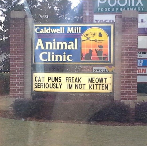 Cat Puns Cat Puns Cat Puns Freak Meowt Pet Clinic