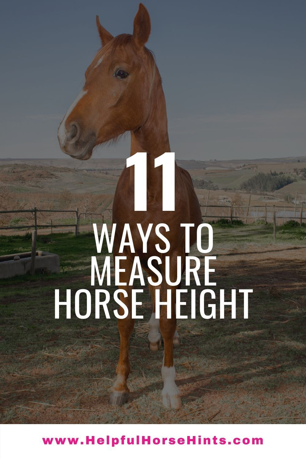 how to measure boxer dog height