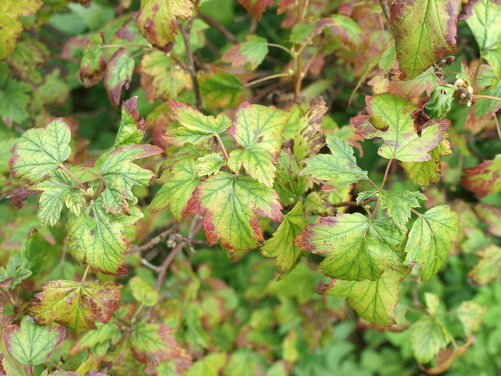 Banish wilted yellow leaves on your plants for good