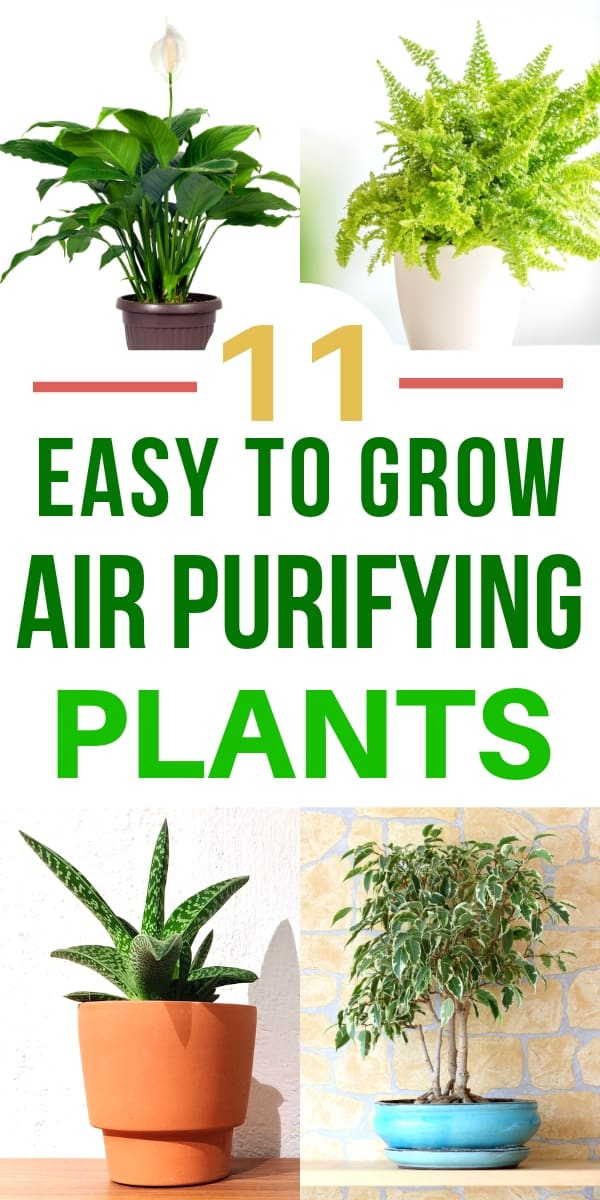 11 Air Purifying PlantsEven Brown Thumbs Can Grow