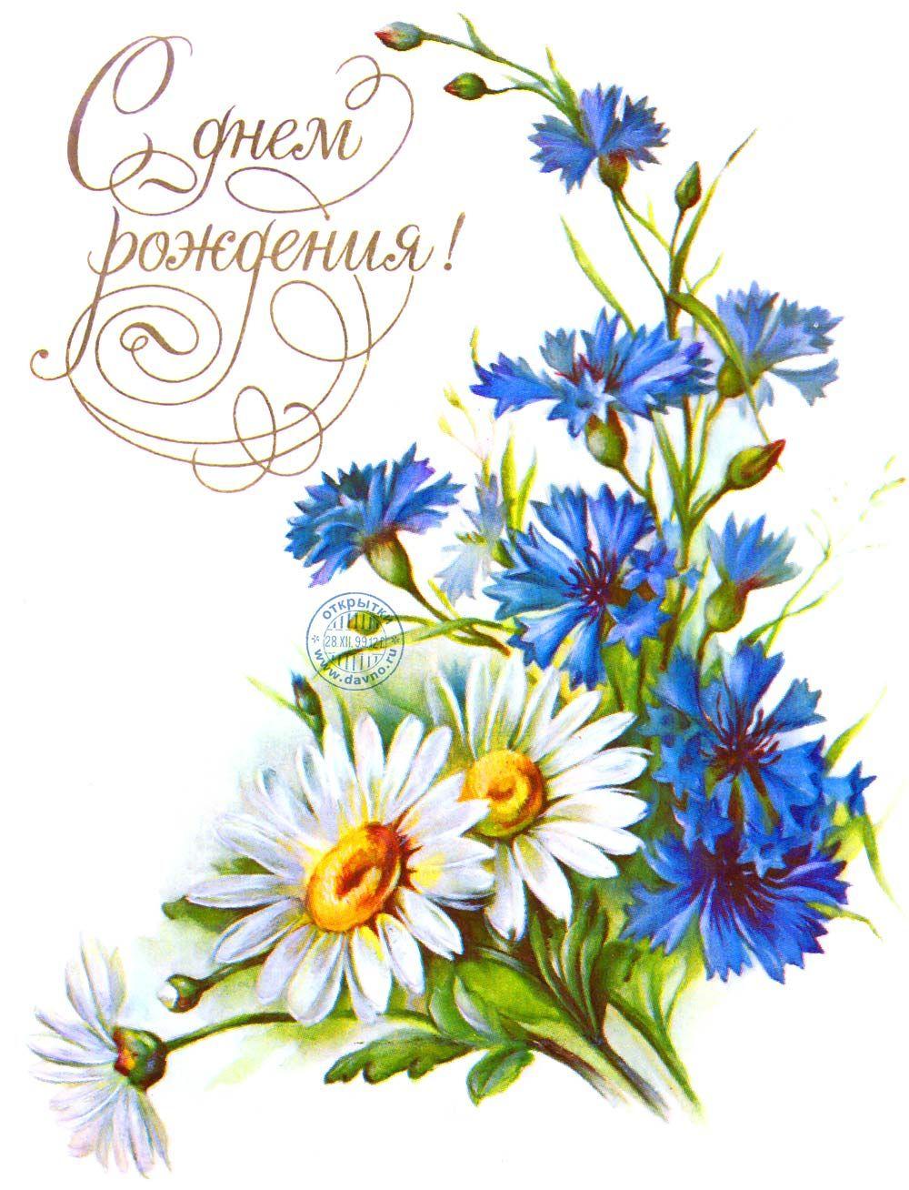 Полевые цветы - васильки и ромашки | Цветочные картины