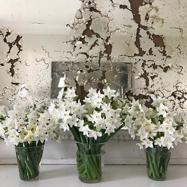 Paperwhite Narcissus fresh from the Scilly Isles (sent by my mother to cheer me up). My absolute favourite winter flower! One sniff and I'm thinking about Christmas. I've ordered a bunch to arrive each week between now and then....utterly beautiful and you're supporting British growers @scentednarcissi #thehatchwilts #countryhouse