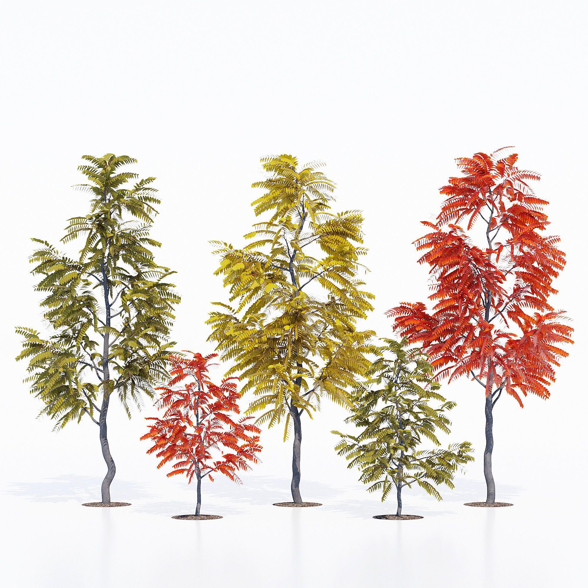 Tree One 3d Model Max Obj Mtl Fbx Mat 1 3d Model Model Tree Model
