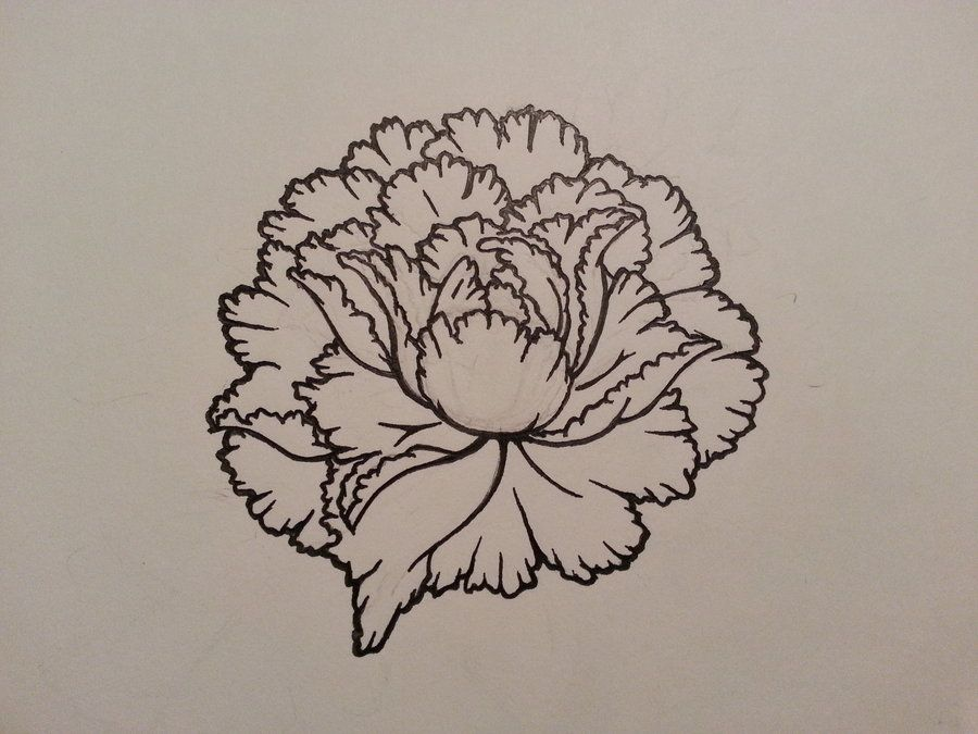 Black Line Flower Drawing : White lily flower drawing at getdrawings free for personal
