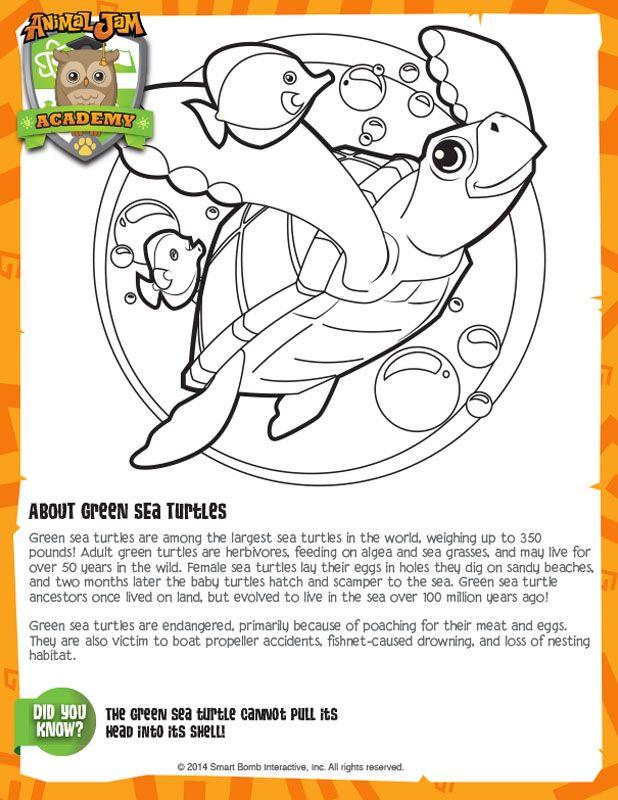 Green Sea Turtles | Animal Jam Academy | Animal Jam Birthday | Pinterest