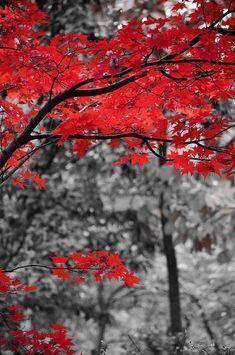 Last Fall Colors 2 Art Print by Alex Rios