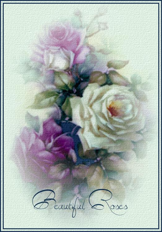 Tag Beautiful Roses