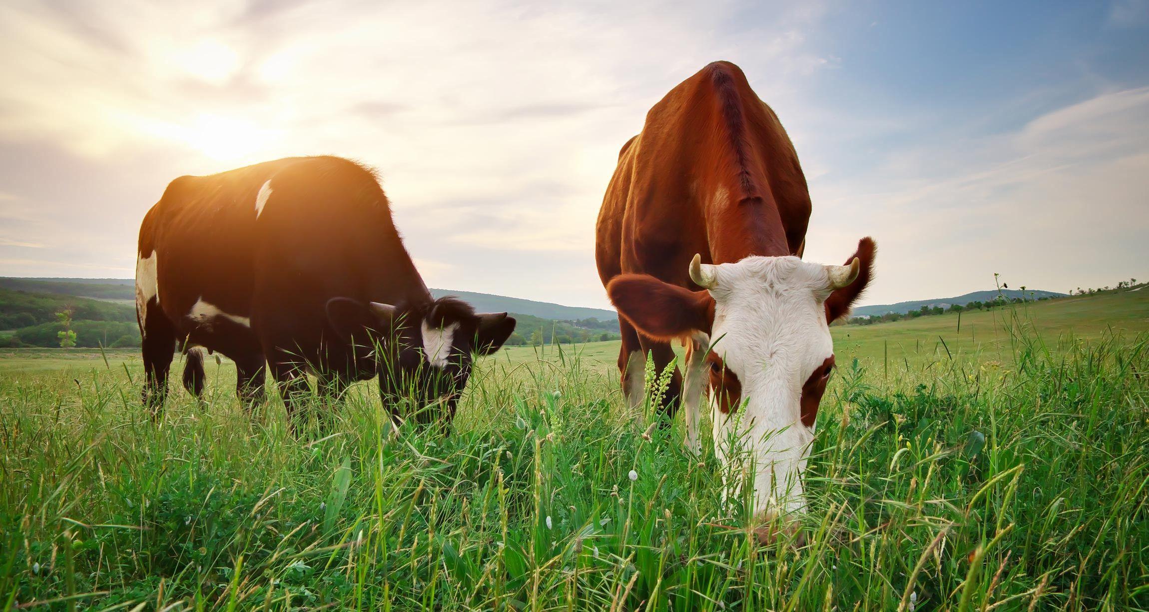 6 Raising Animals Small Farm Blog Featured Grassfed In