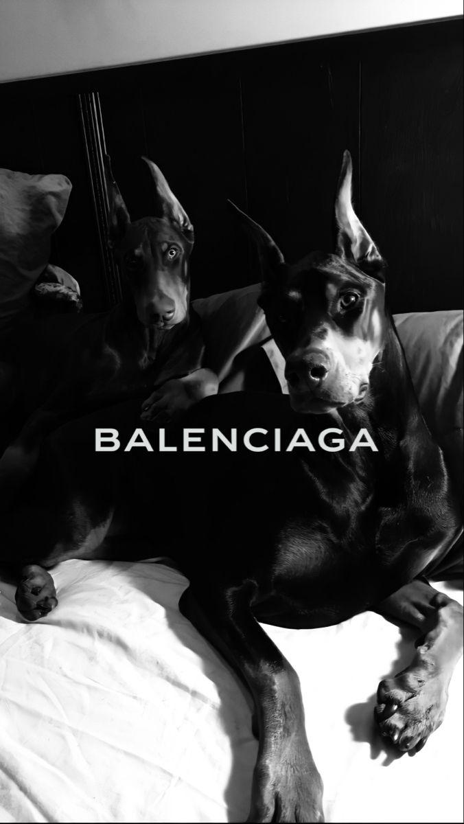 Обои на айфон доберман собаки лого balenciaga