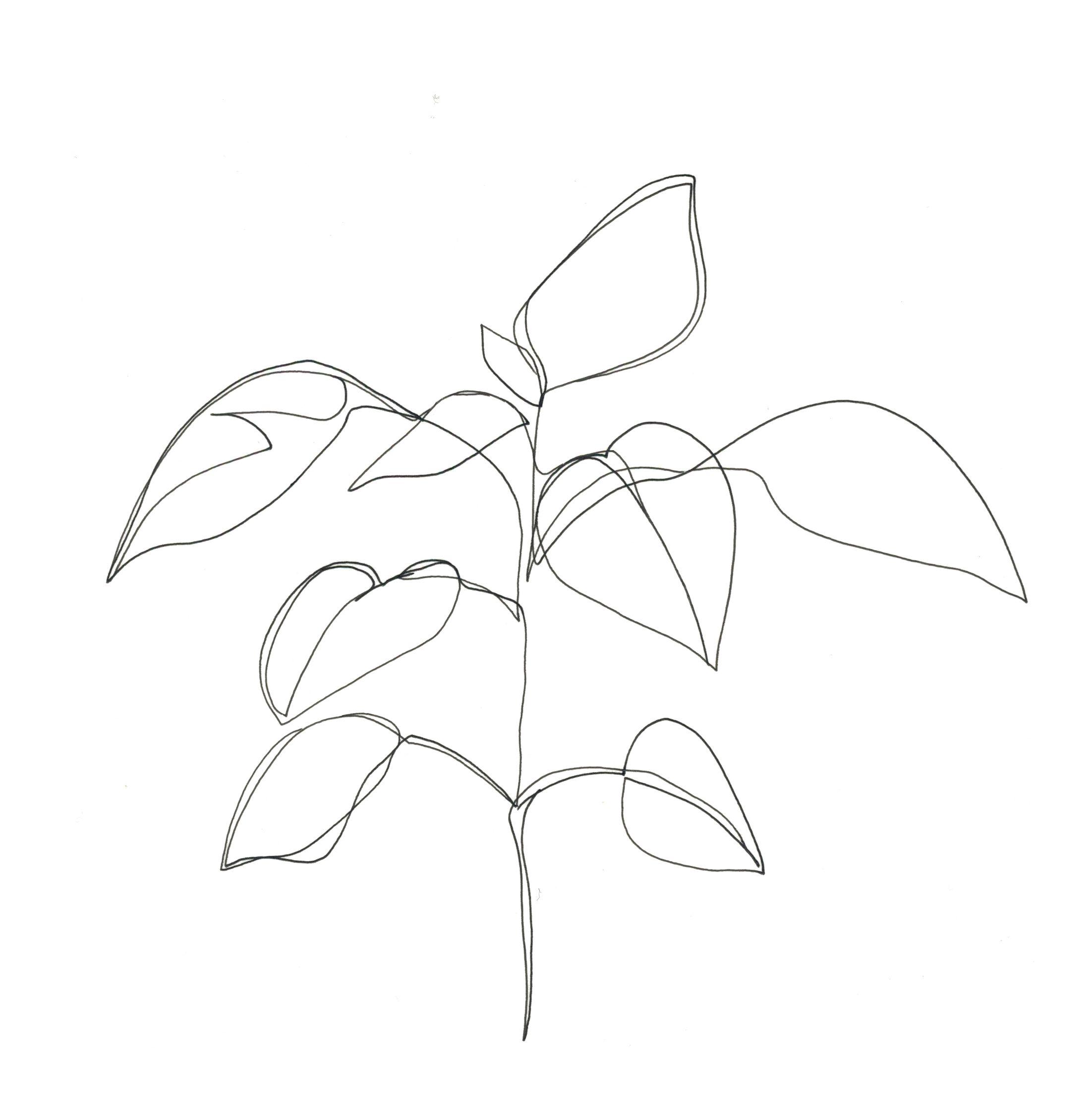 Minimalist Line Art : One line minimal artwork plants and leaves minimalist