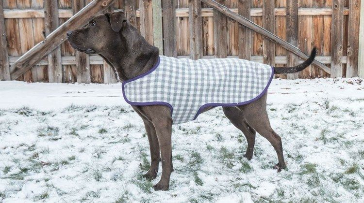 Dainty Dog Coat Pattern For Your Beloved Canine   Hunde, Nähen und Tier