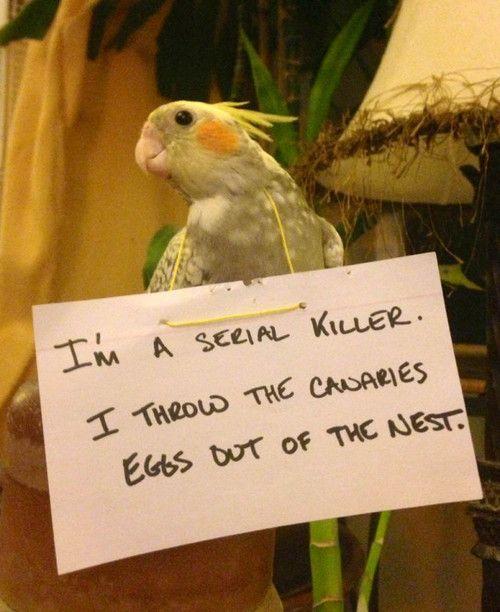Bird shaming
