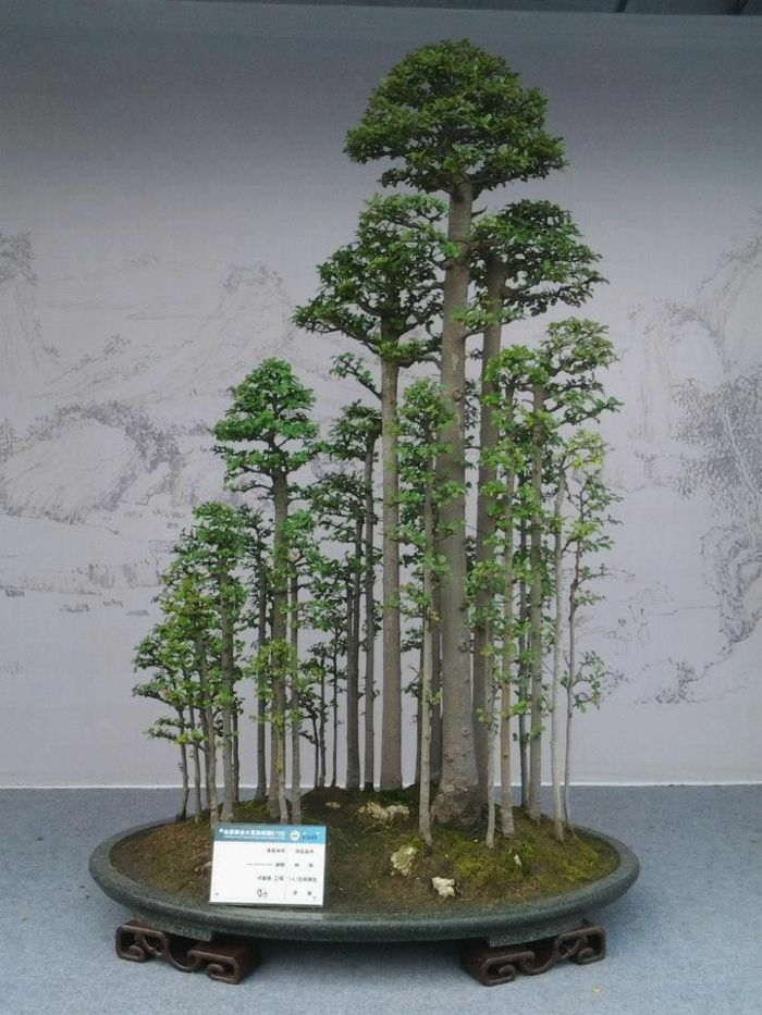 wundersch ne bonsai baum kompositionen bonsai pinterest bonsai wald moos und bett. Black Bedroom Furniture Sets. Home Design Ideas