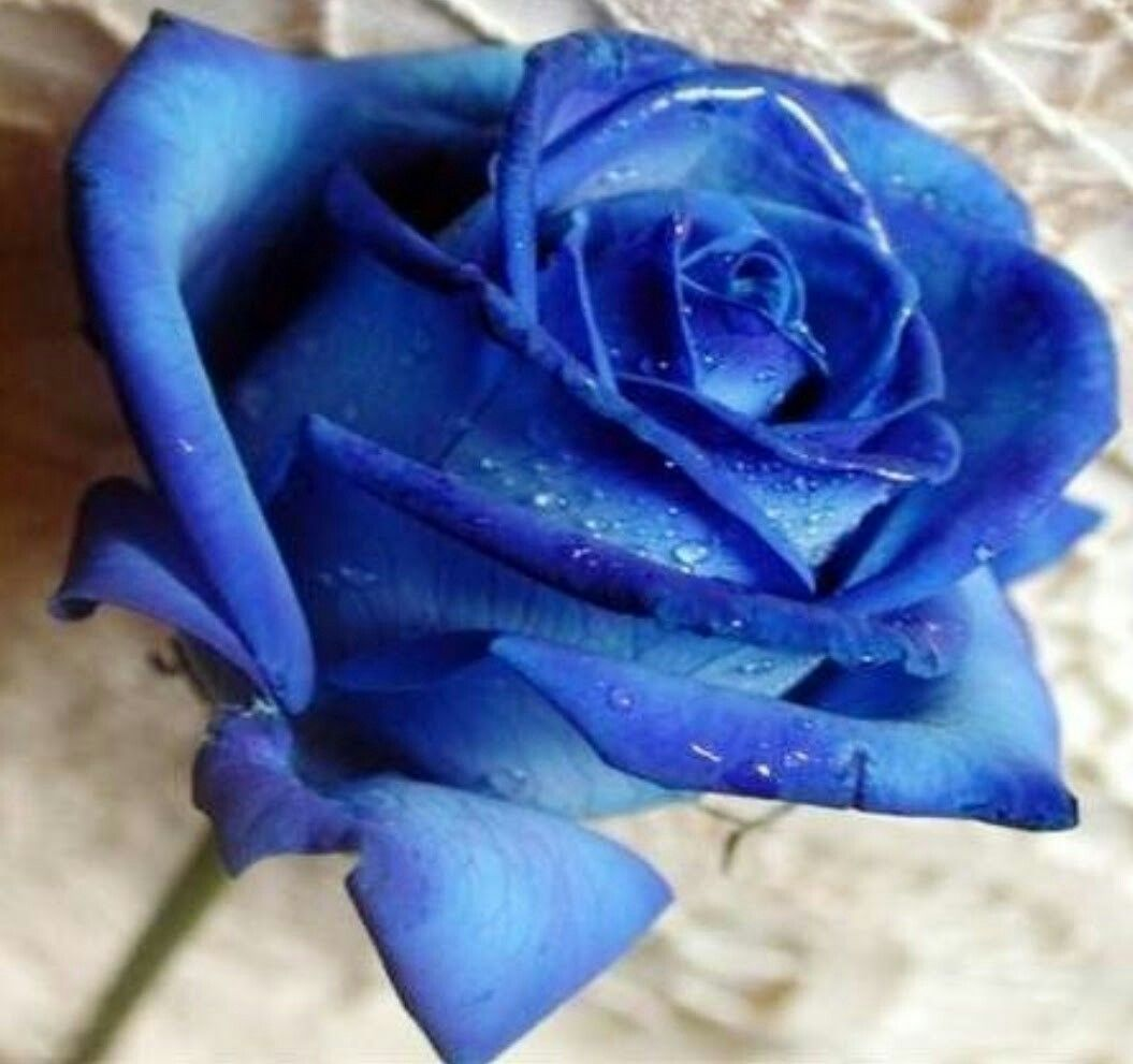 Pin By Regina Riofrio On Las Mejores Rosas Pinterest