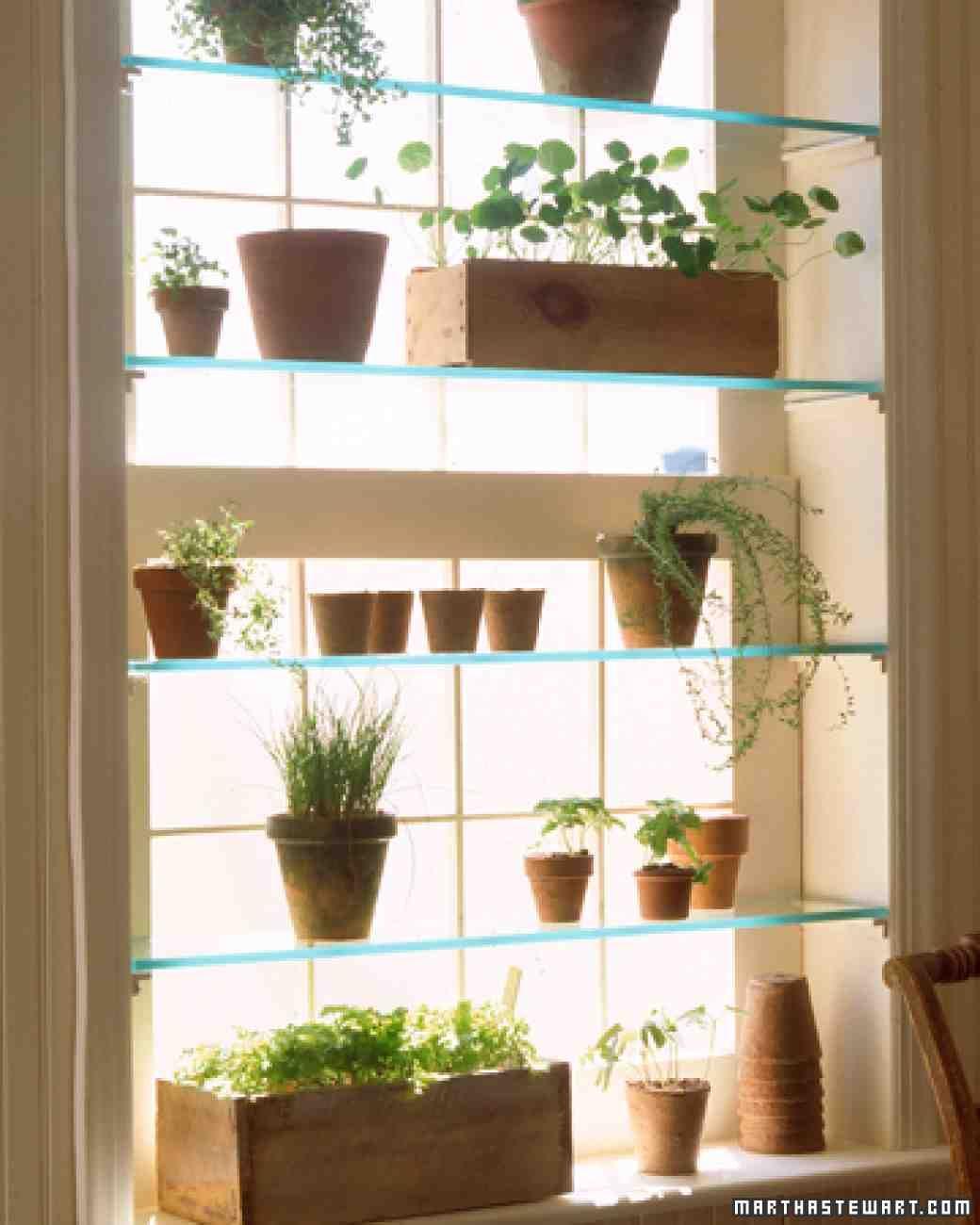 Indoor Window Garden, Window Plants