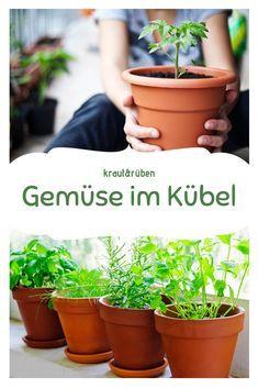 Photo of Gemüse-Sorten für Kübel und Balkon