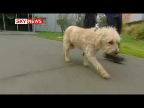 Dog Found After 9 Years And 2000 Km Dogs Animal Rescue Animals