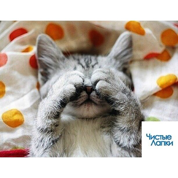 Доброе, картинки с котятами доброе утро любимая прикольные