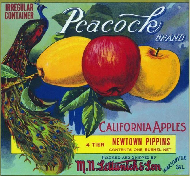 Santa Paula Aeolus Bluebirds Lemon Citrus Crate Box Label Art Print