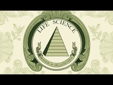 Storia naturale video
