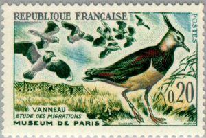 Northern Lapwing(Vanellus vanellus)