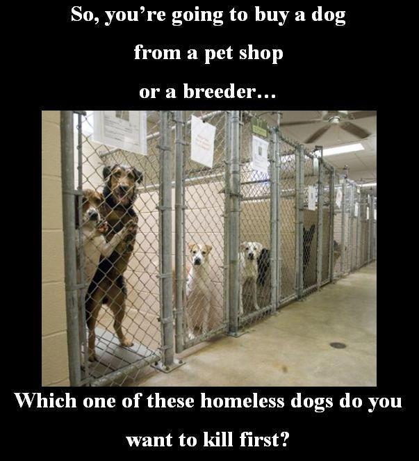 Facebook Error In 2020 Animal Shelter Animal Rescue Animals