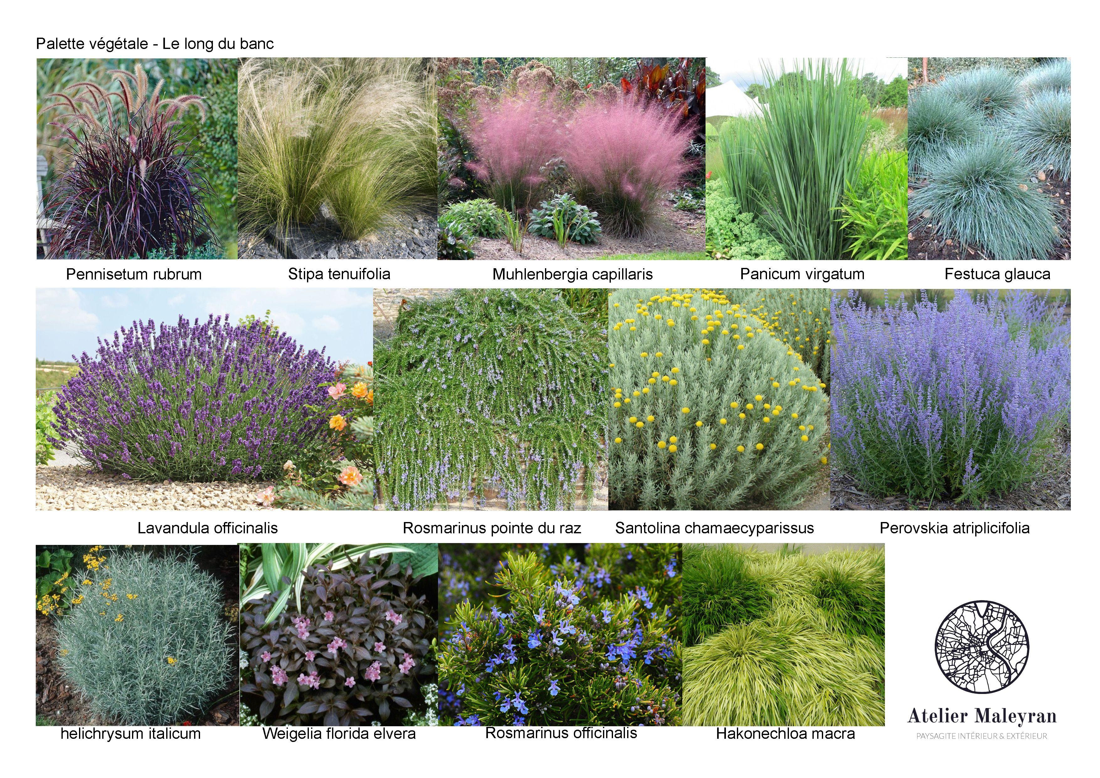 Palette Vegetale Pour Un Massif Ou Une Jardiniere De Plein Soleil