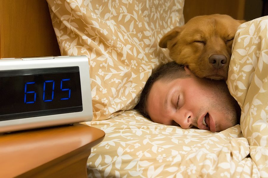 Are Dogs Smarter Than Cats Dog Sleeping In Bed Sleeping Dogs