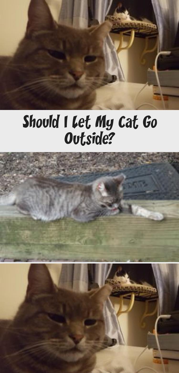 My Blog En Blog in 2020 Indoor cat, Cat playground, Cats