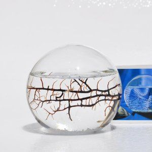 EcoSphere Closed Aquatic Ecosystem, Small Sphere... and its only 53 dollars