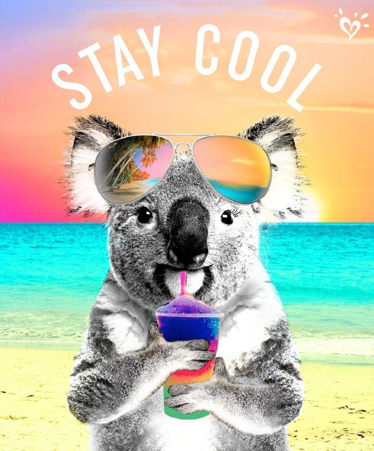 Kool As A Koala Koalas Animaux Droles Bebes Animaux Et