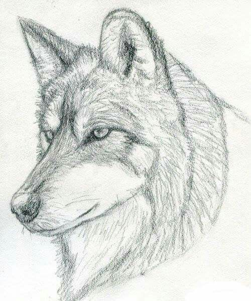 Pin By M Mido On How To Draw Animals Wolf Sketch Wolf Artwork