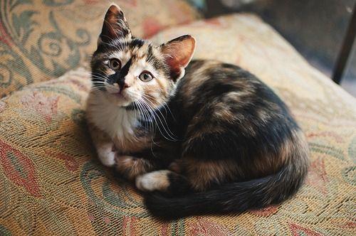 Precious little baby!!