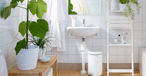 8 shower plants that want to live in your bathroom pinterest