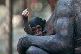 Cheeky monkey....