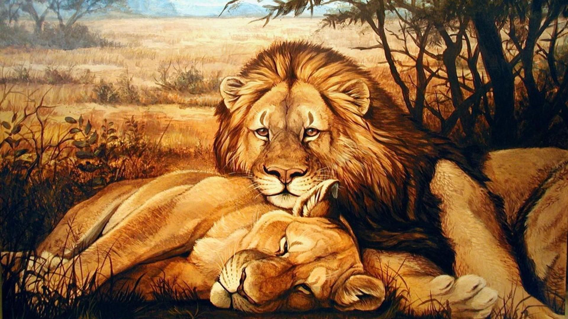 Lion Cheetah And Tiger Animals Big Cat Wallpap 5431 Wallpaper