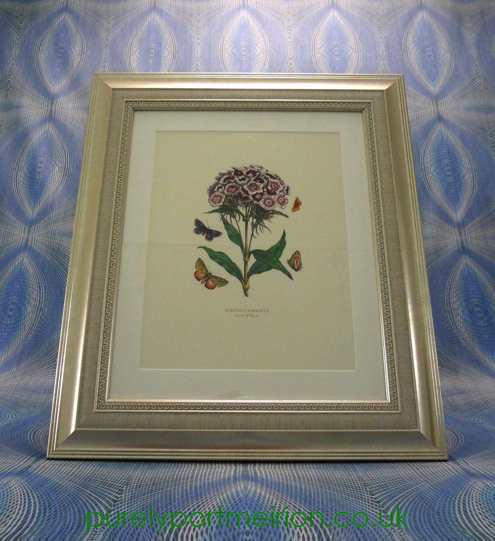 Portmeirion Botanic Garden Framed Genuine Print Sweet William