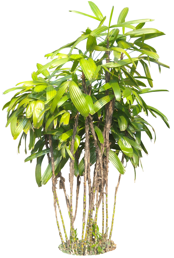A Collection Of Tropical And Subtropical Plant Images With Transparent Background Plant Images Plant Pictures Plants