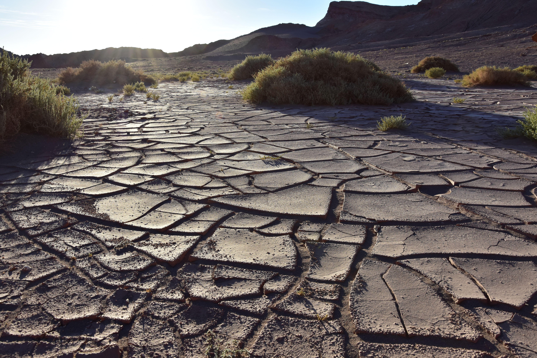 Algo de vegetación en Atacama, Chile