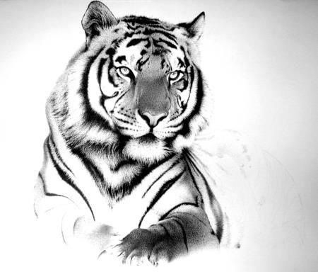 Black And White Tiger But With Blue Eyes White Tiger Tattoo Tiger Tattoo Design Tiger Tattoo