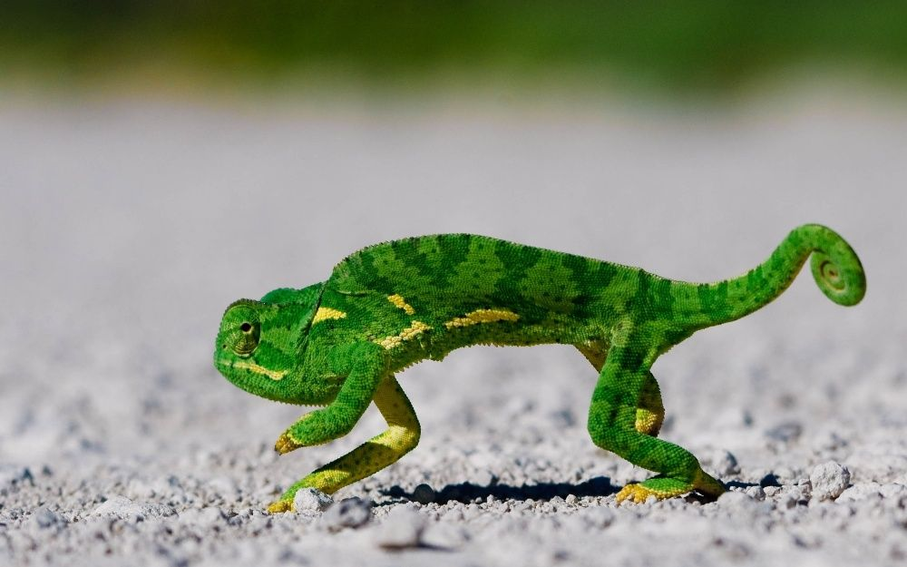 Animals Natural Geographic