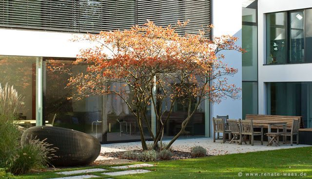 Drzewo wielopniowe szukaj w google ogrody sloped for Gartengestaltung vorgarten modern