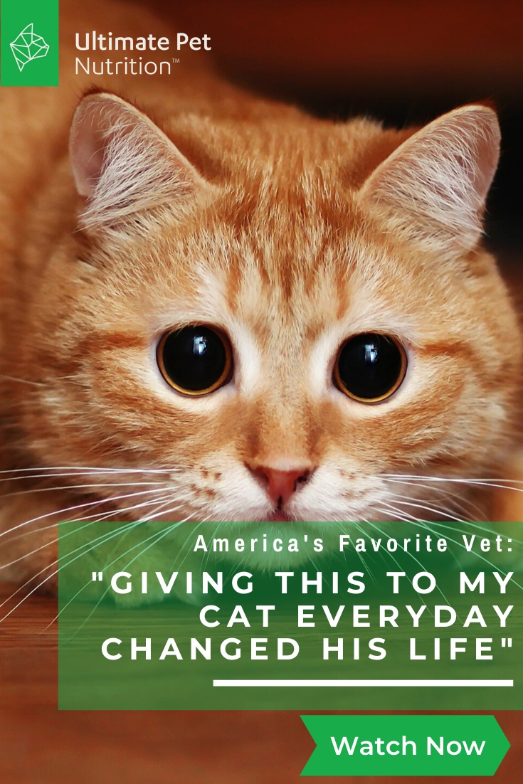 Top Vet This Is The 1 Thing You Can Do For Your Cat In 2020 Pets Cute Animals Cute Cats