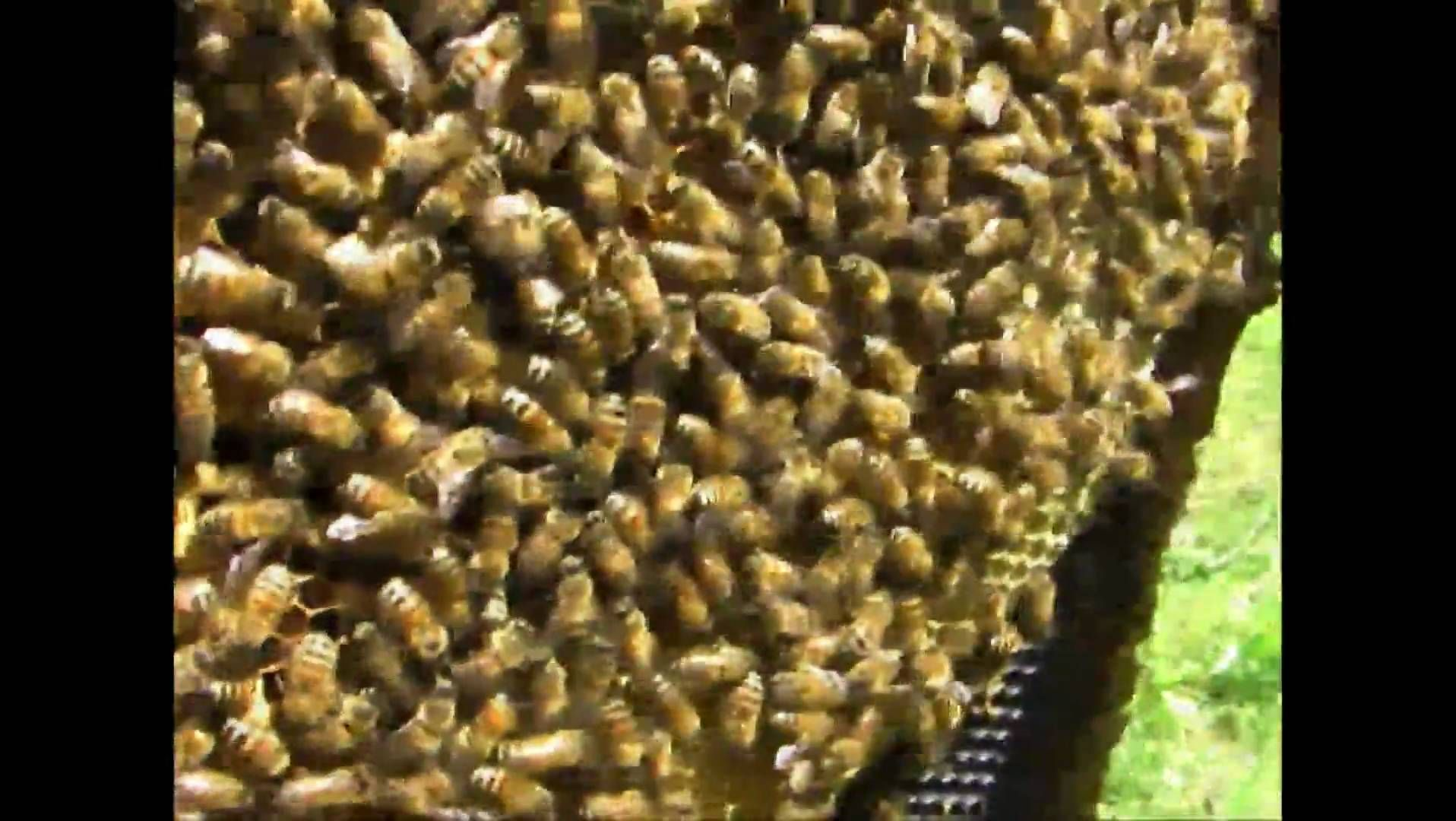 4cfb062996303f8712813a459245d030 - How To Get Rid Of Small Hive Beetle Larvae