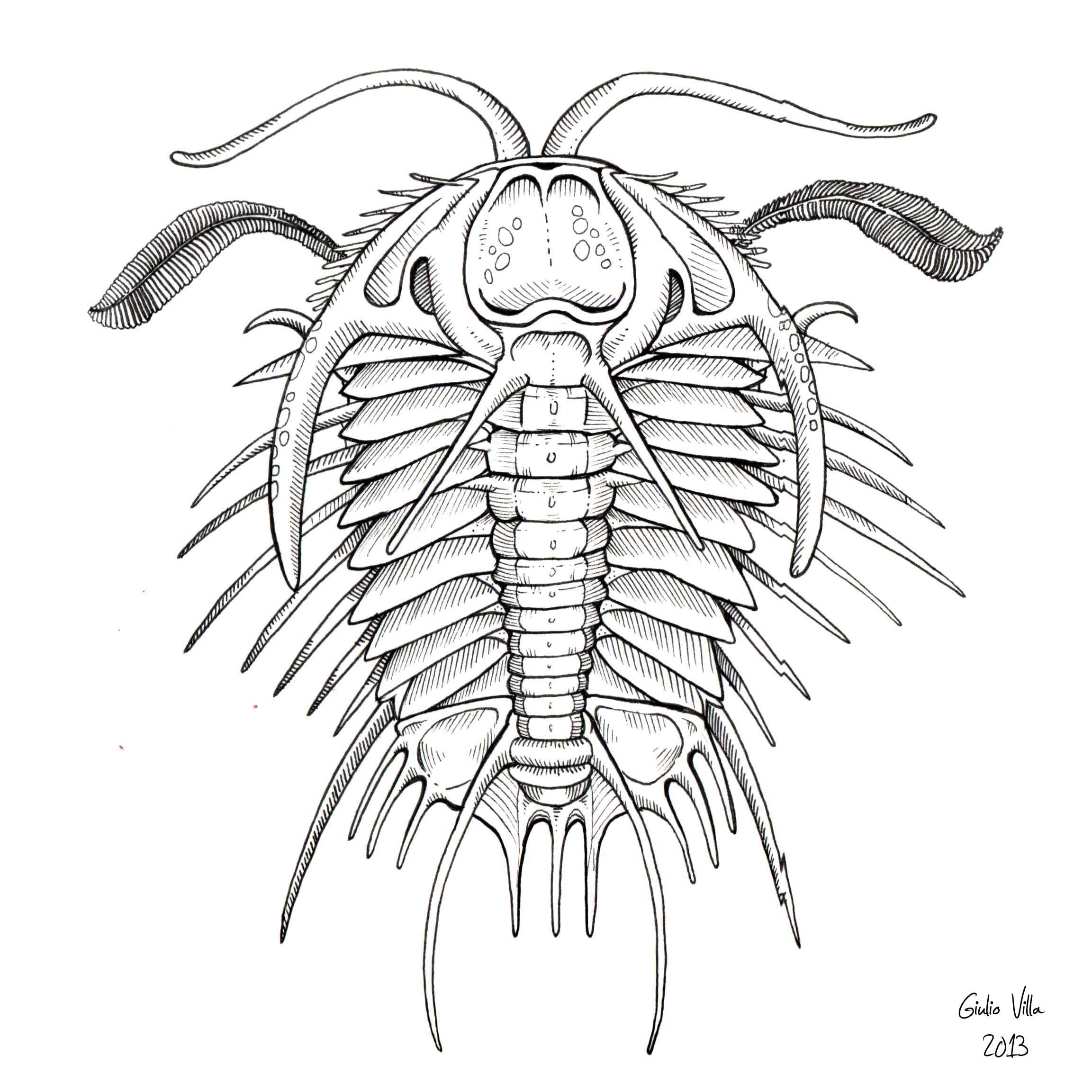 Trilobite Trilobite Pen Illustration Prehistoric