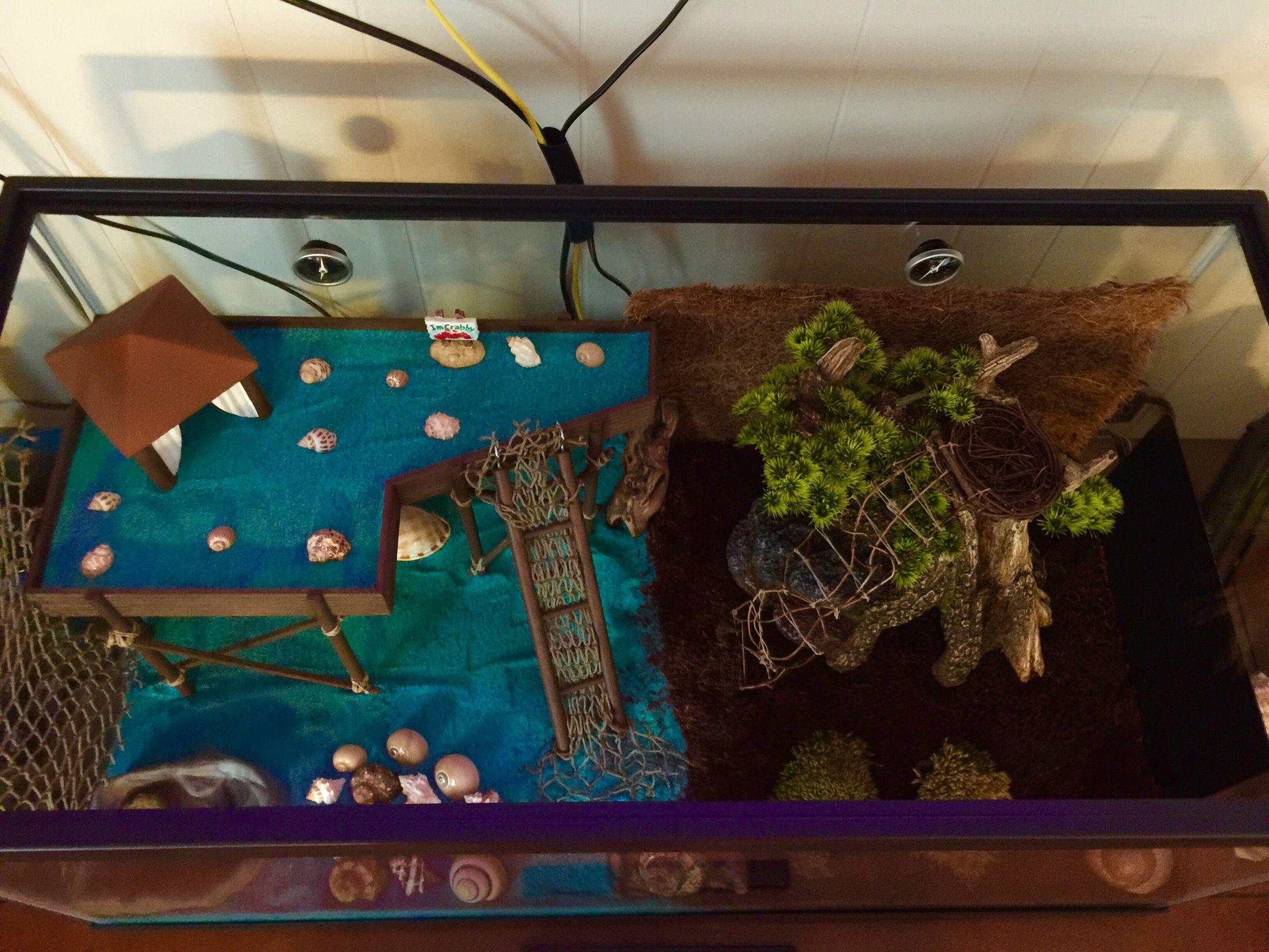 best 25 hermit crab crafts ideas only on pinterest hermit crab