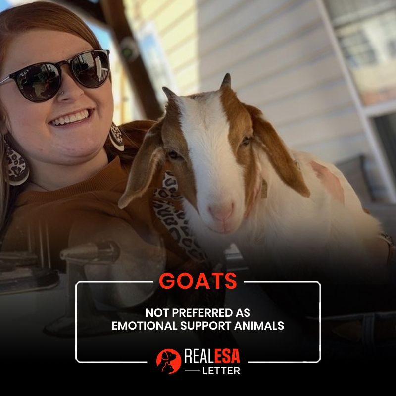 Goats Unconventional Emotional Support Animal in 2020