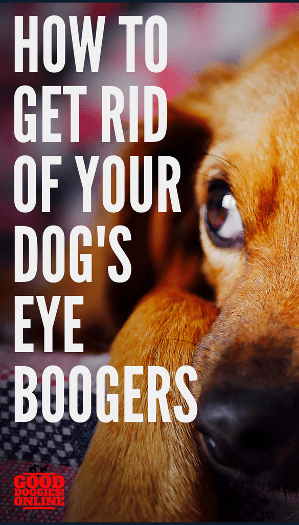 4cfbbc2103a402ca6e2bbedb291f5222 - How To Get Eye Boogers Out Of Dog S Eyes