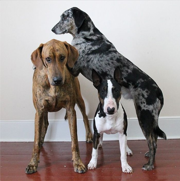 dogs stacked on each other