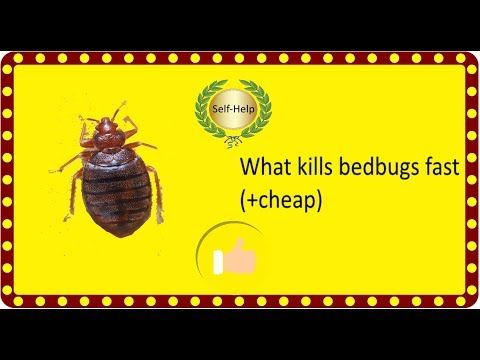 Wondrous How To Get Rid Of Bed Bugs On Couches And Furniture Ibusinesslaw Wood Chair Design Ideas Ibusinesslaworg